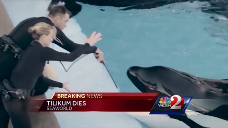 Tilikum Died at 36